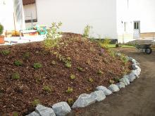 Rasen_Pflanzen _03_.JPG
